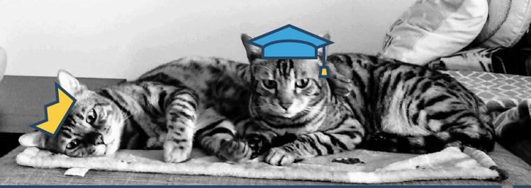 Katze mit Akademikerhut und Krone